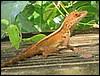 lizard4.JPG